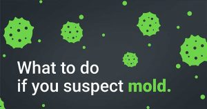 What to do if you suspect mold.